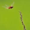 Dragonfly 2012