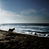 Dog Sea & Blue