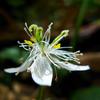 高山に咲く花