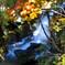 秋色に染まる竜頭の滝