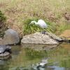 清澄庭園の白鷺と亀