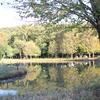 池に映える木々