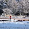 北山公園の雪の朝(1)