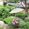 上野東照宮の牡丹