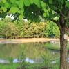 公園の中の池(1)