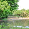 公園の中の池(2)