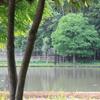 公園の中の池(3)