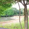 公園の中の池(4)
