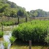 北山公園の菖蒲畑