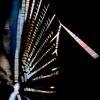 蜘蛛の糸 プリズムⅡ