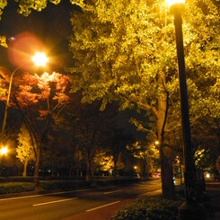 よるの街路樹