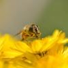 Honeybee 2012