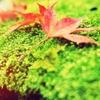 2012秋の景色。