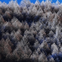 信州・樹氷・氷・雪