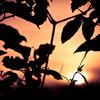 夕陽の沈むころ