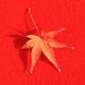 紅の中の葉
