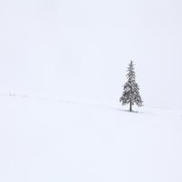 11月のメリークリスマス~美瑛回顧録2012