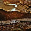 冬枝の舞輝