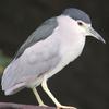 鳥のギャラリー