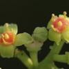 田舎に咲く不思議な花