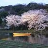 三溪園の夜桜2013