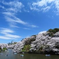 千鳥ヶ淵の桜2013 (5)