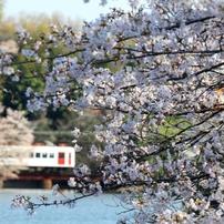 花風景 ~春の貴志川線~