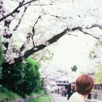 Velvia × 桜