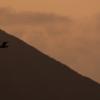 太平洋を飛ぶ鳥