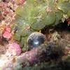 サンゴにビー玉?