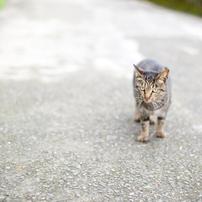 猫の住む町