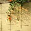wall & flowers