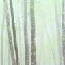 美人林 (3)