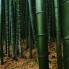 the universe of the bamboos