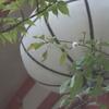 緑に一輪の花