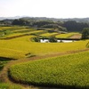 棚田 in AWAJI ISLAND