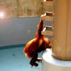 asahiyama-zoo(2008)
