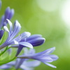 Flowers vol,3