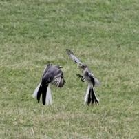 飛んでる鳥達