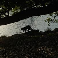 猫撮り散歩308