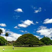 モアナルア・ガーデンの空と緑