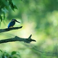 野鳥・昆虫2