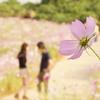 Flowers vol,4