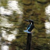 河川敷の小鳥達