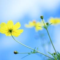 風のように花のようにⅡ