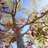 秋色、透きとおる。