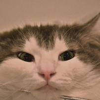 愛猫倶楽部 ~すべての愛猫家の皆様へ~