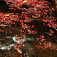紅葉 at 貴船川