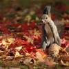 エゾリスの秋