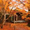 京都の染め葉